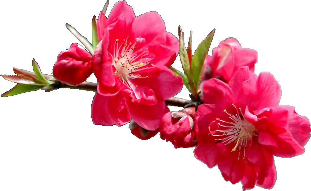 Цветы на умершего 54