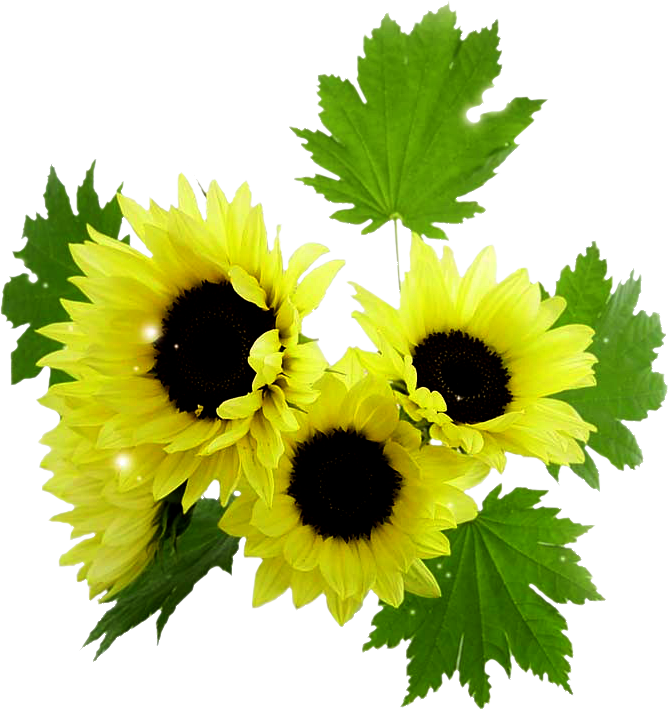 Картинки цветов красивые - 2b