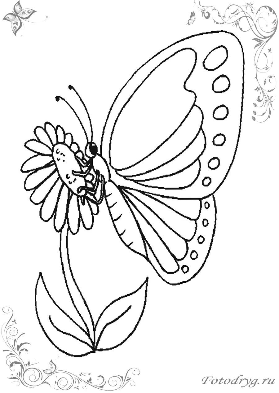 Играем в раскраски бабочки онлайн и печатаем на принтере